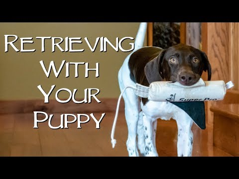 How To Teach Your New Puppy To Retrieve