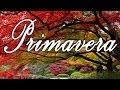 PRIMAVERA - Hino Avulso - Letra - Meninos De Itapetininga
