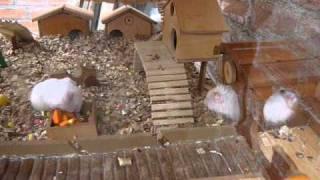 Mansiòn de hamsters