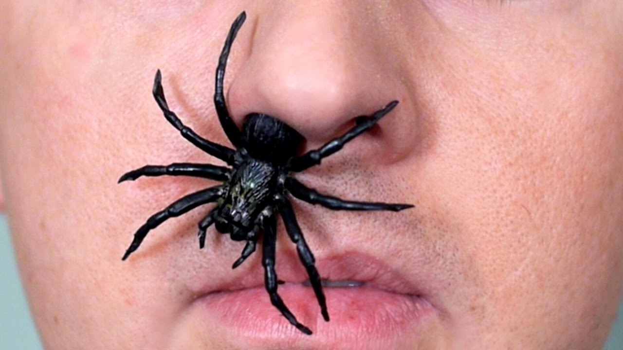 spider in nose youtube