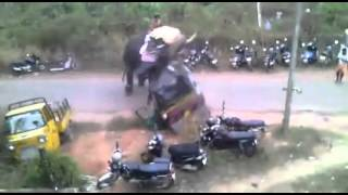 Elephant goes berserk - causes crazy damage in India!