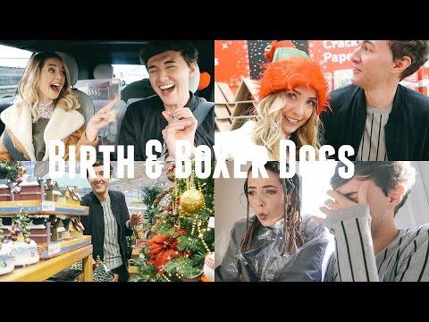 BIRTH & BOXER DOGS