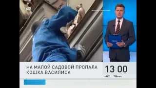 Кошка Василиса пропала с фасада на Малой Садовой. Телеканал «100 ТВ», «100 секунд»