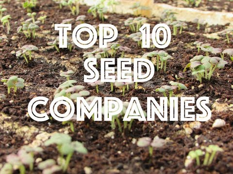 Oxbow Farm's Top 10 Seed Company Picks- Opinions Galore!