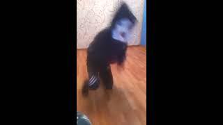 Смешно Танцует мальчик\монатик кружит голову