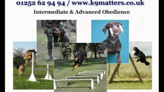 K9 Matters Dog Training