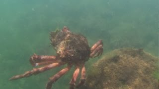 Popular Videos - Crabe & Fish
