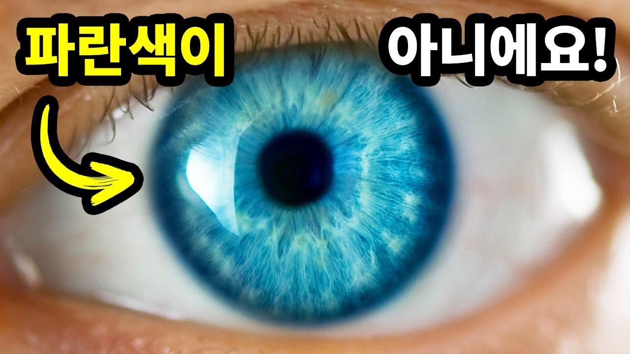 파란 눈이 그저 착시에 불과한 이유