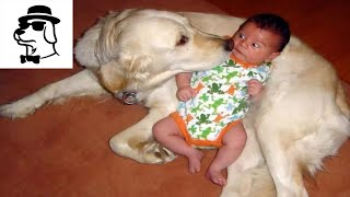Laughing to Faint before The Joke Funny Babies and Dogs | Baby and Dog