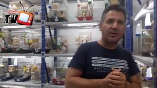 Muhabbet Kuşu Üretimi Nasıl Yapılmalıdır? Veteriner Hekim Ahmet Mert Anlattı.