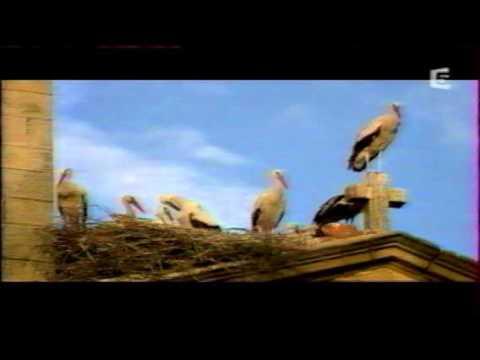 """Vidéo extrait narration doc France 5 """"Les Longs voyages de la cigogne"""""""