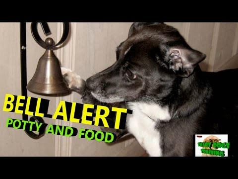 How to teach Your Dog Ring Bell Training in hindi { dog training in hindi }
