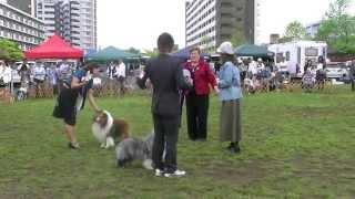 Shetland sheepdog specialty show 東京 ジャッジ Ms.Gayle Eads(USA)