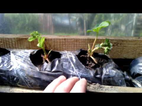 Создаём искусственную атмосферу в саду, или Как сделать парник из полипропиленовых труб своими руками