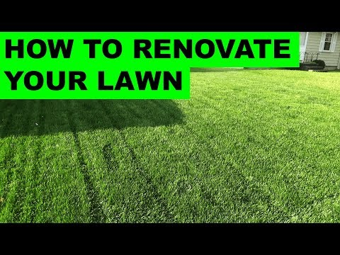 How to Renovate Your Lawn – Complete Lawn Renovation Steps, Start to Finish