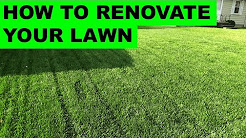 How to Renovate Your Lawn - Complete Lawn Renovation Steps, Start to Finish