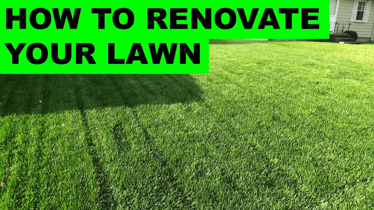Genial How To Renovate Your Lawn   Complete Lawn Renovation Steps, Start To Finish