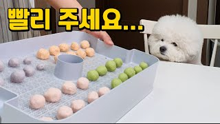 강아지 수제간식 건강사탕 만들기