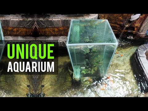 The fish penthouse an above water aquarium doovi for Above water fish tank