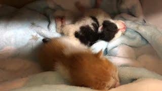 오늘 7꼬물이 엄마를 만나고 왔어요...