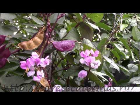 Вирусные заболевания растений фото хлороза листьев