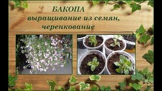 видео Санвиталия: фото цветка, выращивание из семян, посадка и уход в домашних условиях