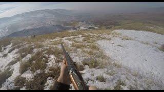Охота на серую куропатку: Ирландский сеттер
