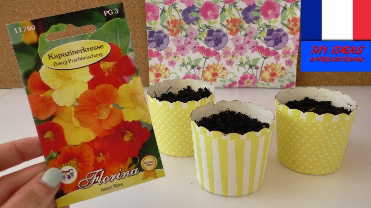 semer des graines de capucines fleurs comestibles faire pousser dans des moules muffin. Black Bedroom Furniture Sets. Home Design Ideas