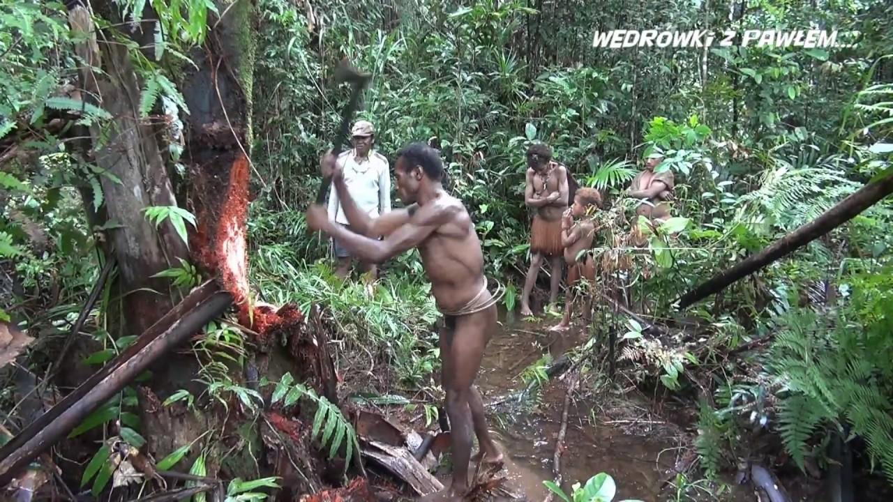 Download Papua  Korowajowie ludzie żyjący na drzewach. Film turystyczny, podróże Pawła Krzyka, film HD