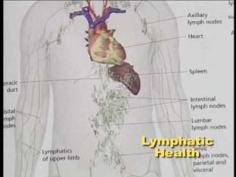 Lymphatic System Health