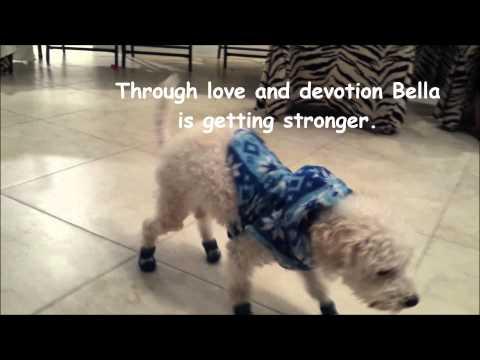 Bella - Update No. 3 - Maltese Rescue California