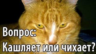 РЖАКА! Чихает и кашляет мой рыжий кот...)