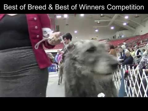 5-27-2017 Southeast Arkansas Kennel Club, Monroe, LA -  Irish Wolfhounds