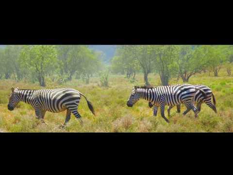 BEAUTIFUL KENYA   |  travel video