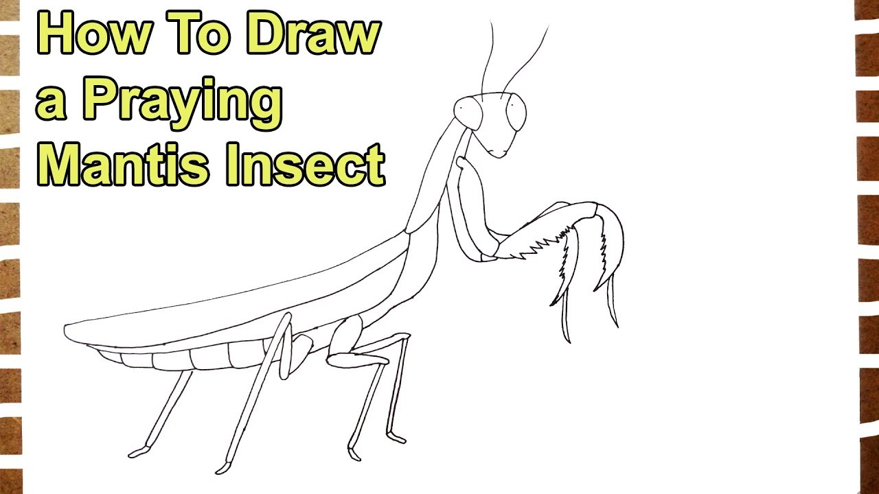 How To Draw A Praying Mantis Insect Step By Step Youtube