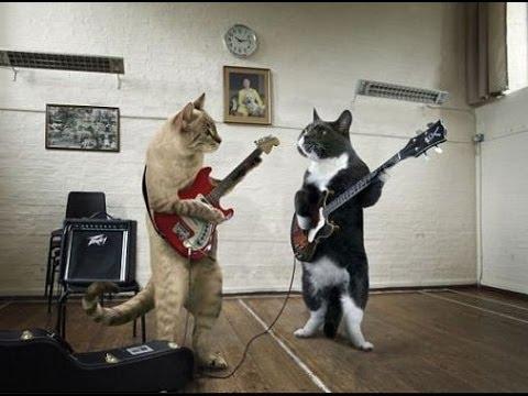 Bildergebnis für animals and music