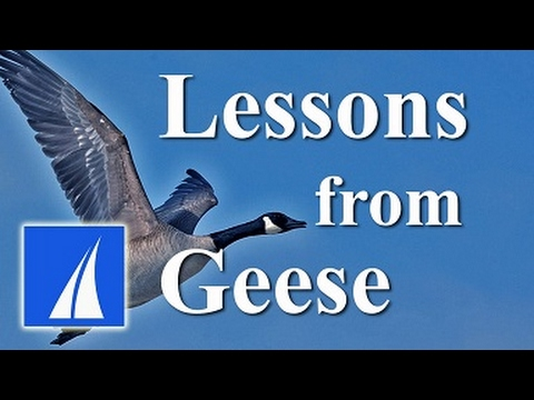 Lessons from Geese