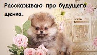рассказываю про собаку, обман продавцов!!!