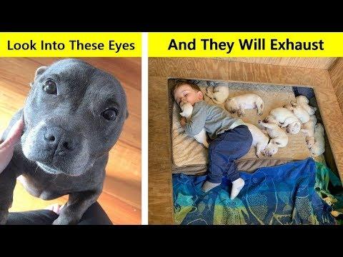 Photos Proving Every Family Needs A Pet