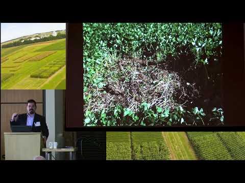 Matt Ruark OGRAIN Presentation: Legume Cover Crops for Organic Grains