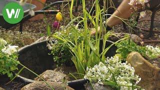 Wasserpflanzen im Mini - Gartenteich - so wird der kleine Teich angelegt!
