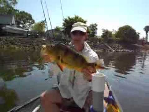 Peacock bass fishing naples florida youtube for Fish naples fl