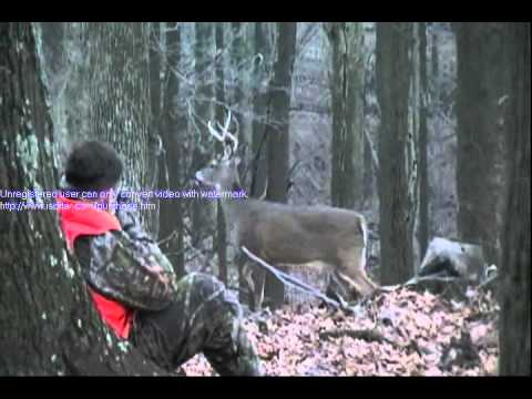 Unbelievable Encounter with Whitetail Deer