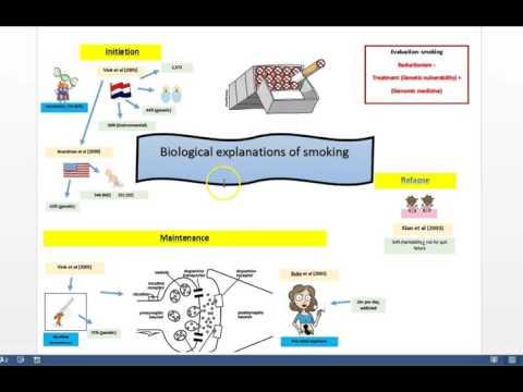 Biological explanations of ADDICTION + A grade exam answer (PSYA4)