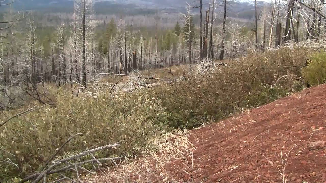 Secondary Succession Forest Fire 202sp