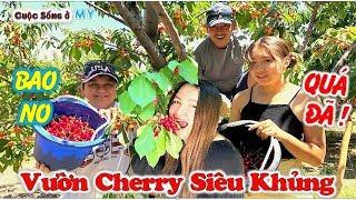 ❀//Vlog 218// Khám Phá Vườn Cherry Siêu Rộng Ở Mỹ - Bao No - Bao Lựa Thoải Mái Và Cái Kết...