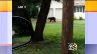 Bear Spotted In Burlington County