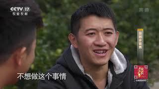 《田间示范秀》 20200113 小血橙遇到的大难题|CCTV农业