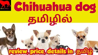 Chihuahua dog in tamil/Chihuahua dog price in India/petstamila/Tamil/foreign dog breeds/dogs