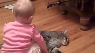 【猫動画】赤ちゃんとねこ【かわいい癒されます(*´∀`*)】